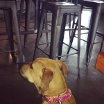 Dog Friendly Places in CLE | Dog Life in CLE