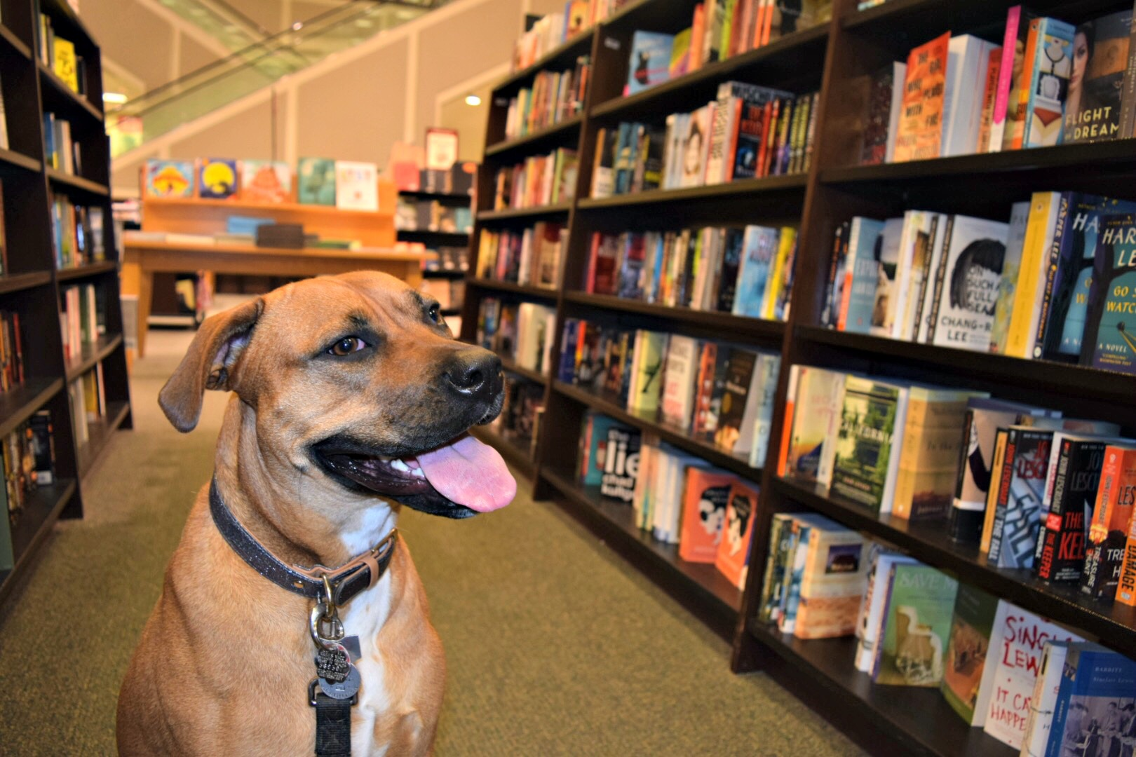 Barnes and Noble | Dog Life in CLE