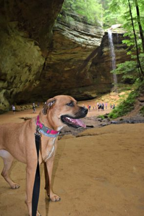 Dog Friendly Vacation: Hocking Hills | Dog Life in CLE