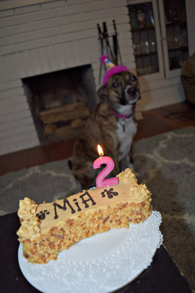 After Some Photos With The Cake And One Of Her Birthday Presents Which Was A Zippy Paws Toy Mia Bella Demolished In No Time