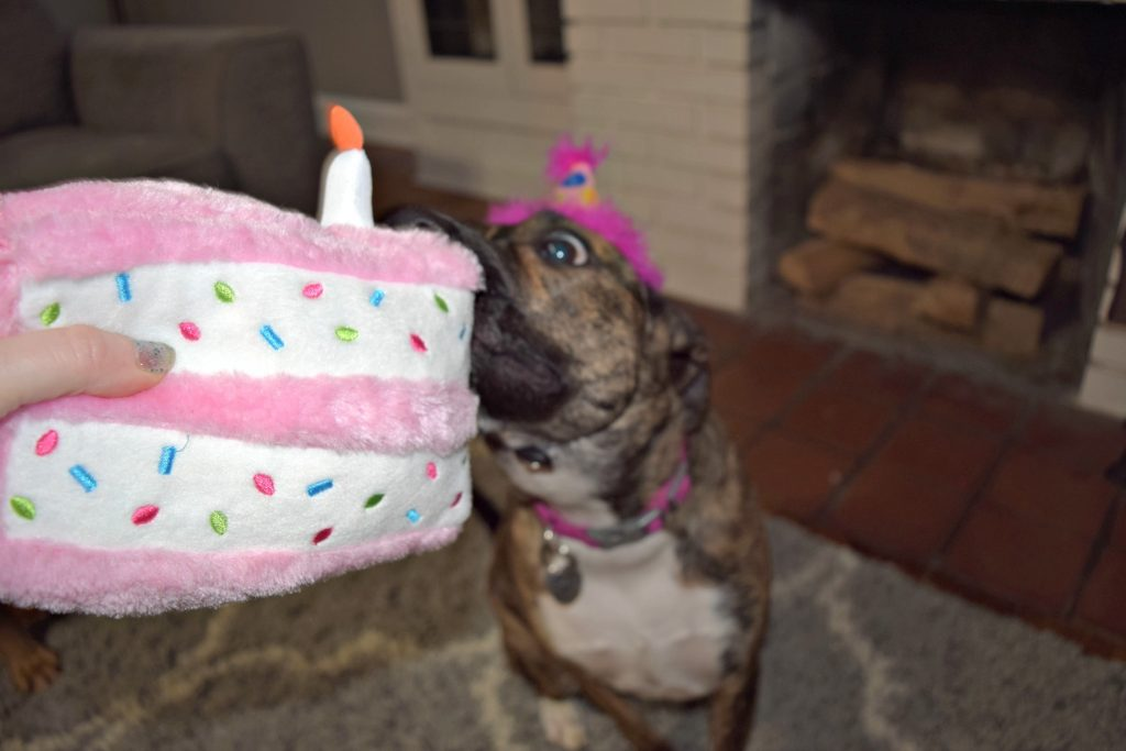 Mia S 2nd Birthday Dog Life In Cle