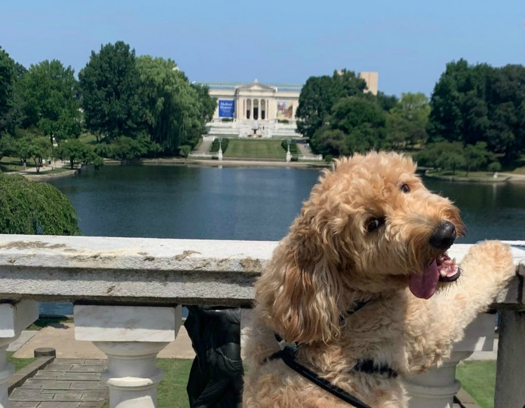 Winners of the 2020 Cleveland Dog Calendar Contest | Dog
