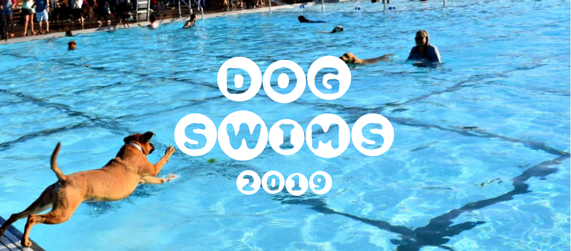 Dog Swims 2019 | Dog Life in CLE